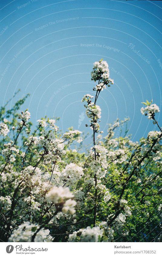 Nichtröslein Glück Ausflug Abenteuer Freiheit Sommer Garten Wissenschaften Umwelt Natur Pflanze Wolkenloser Himmel Sonnenlicht Schönes Wetter Blume Sträucher