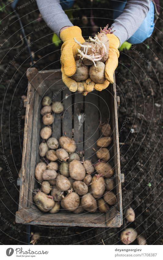 Frau Natur Pflanze Hand Erwachsene natürlich Garten Wachstum Erde frisch Boden Gemüse Bauernhof Ackerbau Gartenarbeit Kiste