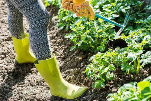 Mensch Mann Pflanze Sommer grün Hand Erwachsene Garten Arbeit & Erwerbstätigkeit Erde Boden Bauernhof Ackerbau Werkzeug Landwirt Gartenarbeit