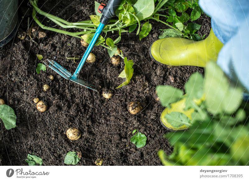 Kartoffeln hacken Sommer Garten Arbeit & Erwerbstätigkeit Gartenarbeit Werkzeug Mensch Mann Erwachsene Hand Pflanze Erde grün Landwirt Hacke Ackerbau Boden