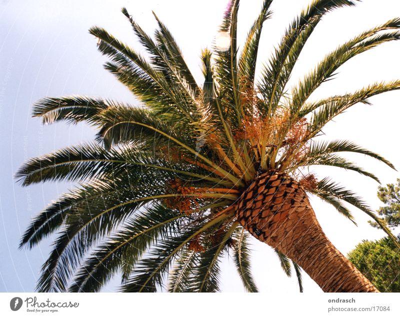 Unter Palmen Baum Strand Süden Physik Meer Sonne Wärme Mittelmeer Sea