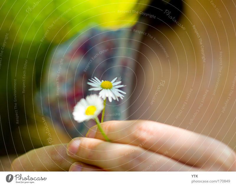 Eins für mich und eins für dich! Frau Natur Jugendliche Pflanze schön Sommer Blume Hand Erwachsene Wärme Blüte Gefühle Frühling feminin Freundschaft Blühend