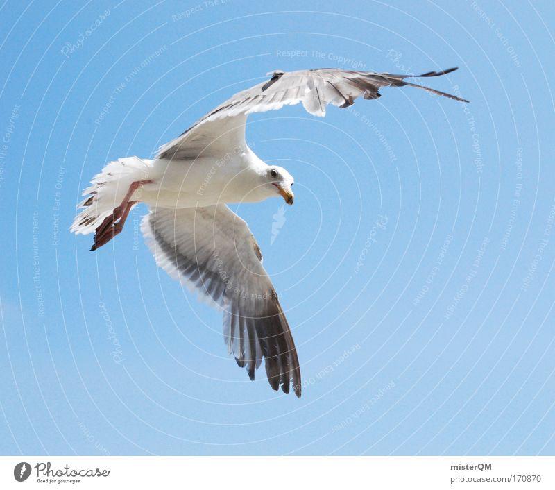 Späher. Strand Meer Ferien & Urlaub & Reisen Freiheit Luft Vogel Wind fliegen Suche Luftverkehr Pause Feder stoppen Flügel entdecken leicht