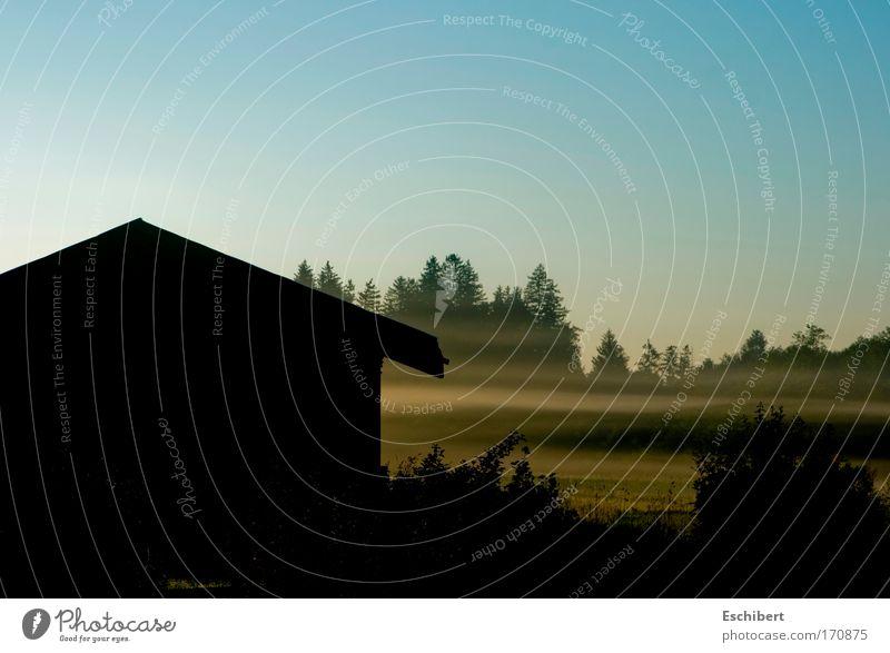 Nebelschwaden Himmel Natur Wasser Baum Ferien & Urlaub & Reisen Pflanze Freude Erholung Wiese Landschaft kalt Luft elegant natürlich leuchten