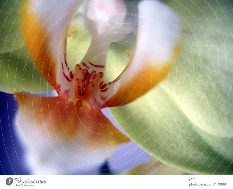 Wunder der Natur blau weiß schön Baum rot Pflanze Sommer Blume gelb Blüte außergewöhnlich elegant modern ästhetisch nah