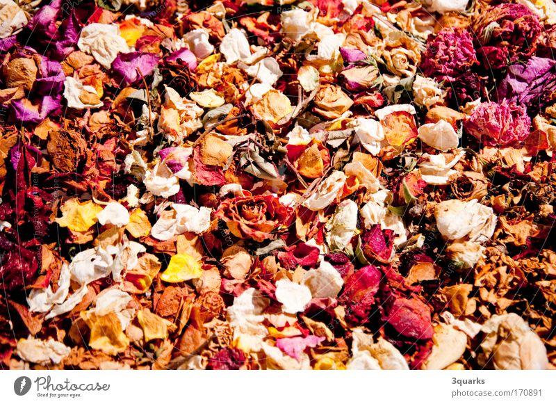 dried flowers mehrfarbig Detailaufnahme Wellness Duft Dekoration & Verzierung Pflanze Blume Blumenstrauß ästhetisch schön Romantik Farbe Natur