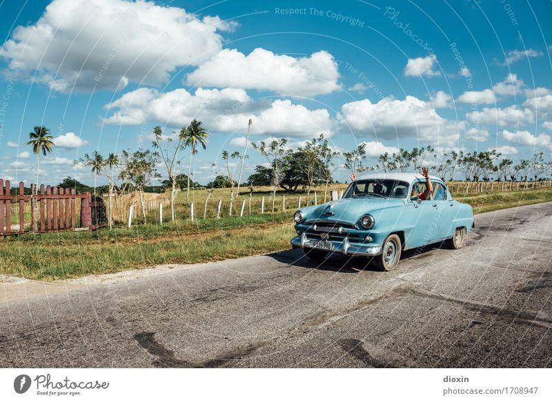 ¡Hola Cuba! Ferien & Urlaub & Reisen Tourismus Ferne Sonne Insel Umwelt Natur Landschaft Himmel Sonnenlicht Schönes Wetter Pflanze Baum exotisch Palme Weide