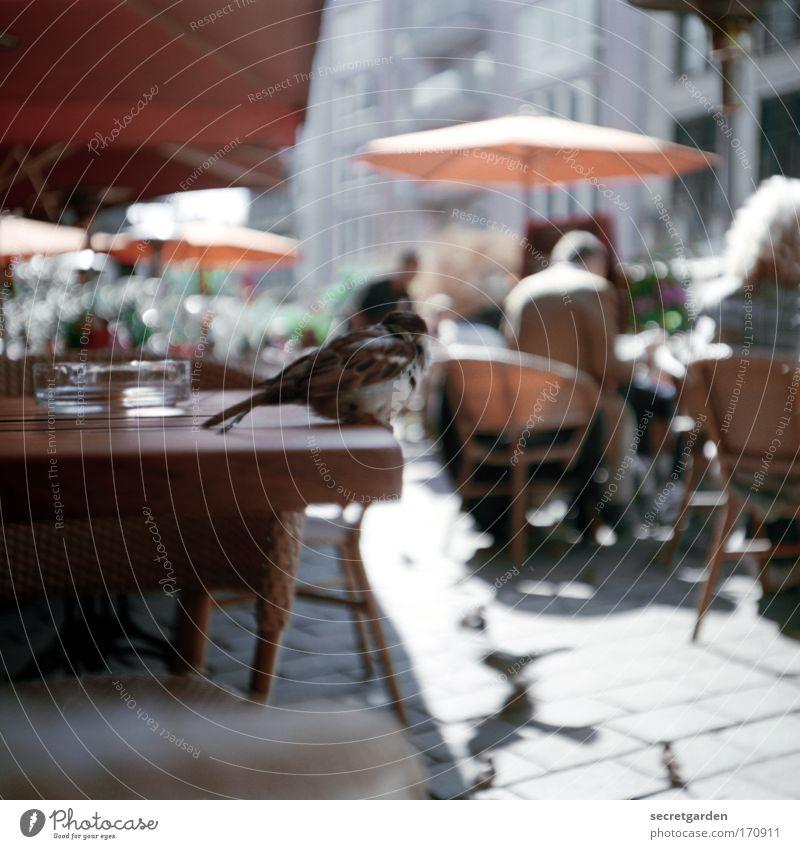 lieber der spatz auf dem tisch als aufm dach. Mensch schön Stadt Sommer Ferien & Urlaub & Reisen Einsamkeit Tier Holz Glück Lomografie Vogel klein sitzen Tisch Perspektive beobachten