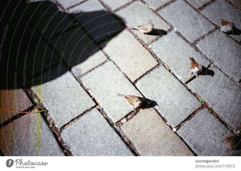 der schatten über uns. Farbfoto Gedeckte Farben Außenaufnahme Nahaufnahme Experiment Lomografie Holga Menschenleer Morgen Tag Licht Schatten Silhouette