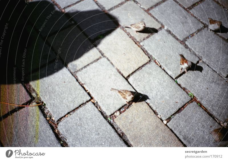 der schatten über uns. Sommer schwarz Stein Linie Vogel dreckig frei Erde Netzwerk Platz Tiergruppe bedrohlich analog gruselig Neugier niedlich