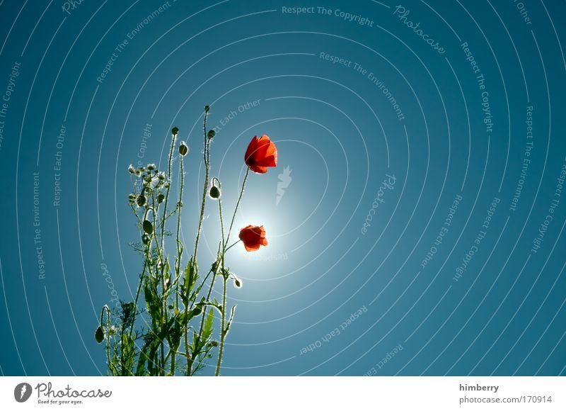 sonntag ist mohntag Natur schön Himmel Blume Pflanze Sommer Stil Landschaft Zufriedenheit Design Umwelt Lifestyle Energiewirtschaft ästhetisch Kitsch