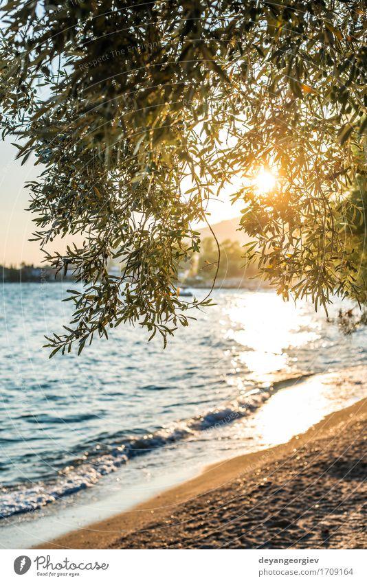 Olivenbäume, Meer und Sunse schön Ferien & Urlaub & Reisen Tourismus Sommer Sonne Strand Insel Berge u. Gebirge Garten Natur Landschaft Himmel Baum blau oliv