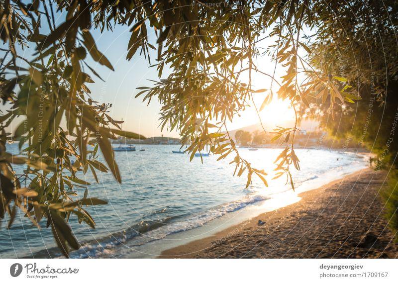 Olivenbäume, Meer und Sonnenuntergang. schön Ferien & Urlaub & Reisen Tourismus Sommer Strand Insel Berge u. Gebirge Garten Natur Landschaft Himmel Baum blau