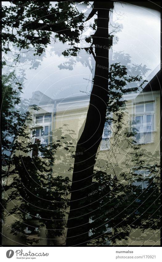 ein Bier zu viel . . . Natur Stadt Baum Blatt Haus Fenster Traurigkeit träumen Stimmung gehen Fassade Freizeit & Hobby Hochhaus Dach Schmerz Stress