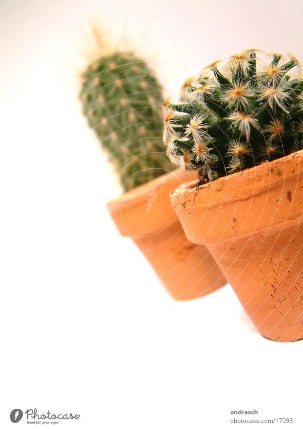 Kaktusse  =) Sukkulenten Pflanze trocken Nachttopf Raum Fenster Stachel Pieks Wüste