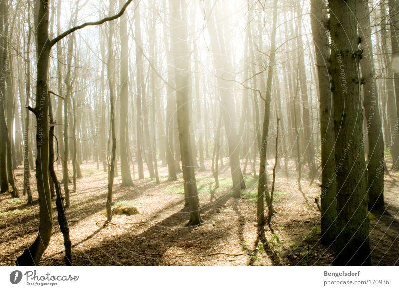 Lichtschwimmen Natur Baum Sonne ruhig Ferne Wald Freiheit Denken frei Erde Ausflug Freizeit & Hobby Moos