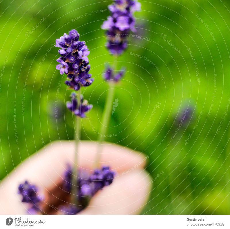 Im Garten Mensch Natur Hand schön Blume grün Pflanze Sommer Wiese Blüte Frühling Park Umwelt Finger violett Dekoration & Verzierung