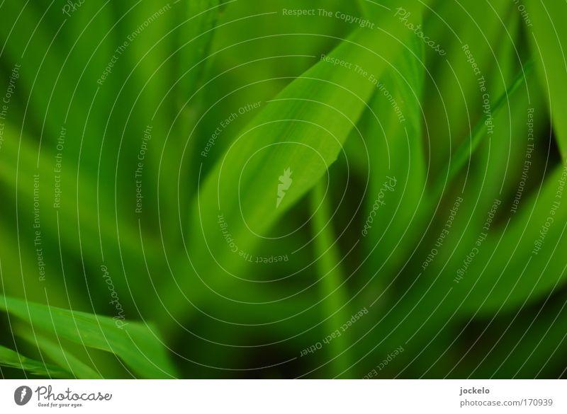 Grün ist die Hölle Natur grün Pflanze schwarz Tier Wiese Umwelt Gras Sträucher saftig