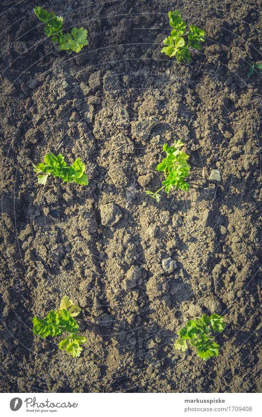urban gardening selbstversorung Lebensmittel Gemüse Kräuter & Gewürze Lifestyle Freude Glück Gesundheit Gesunde Ernährung harmonisch Freizeit & Hobby Spielen