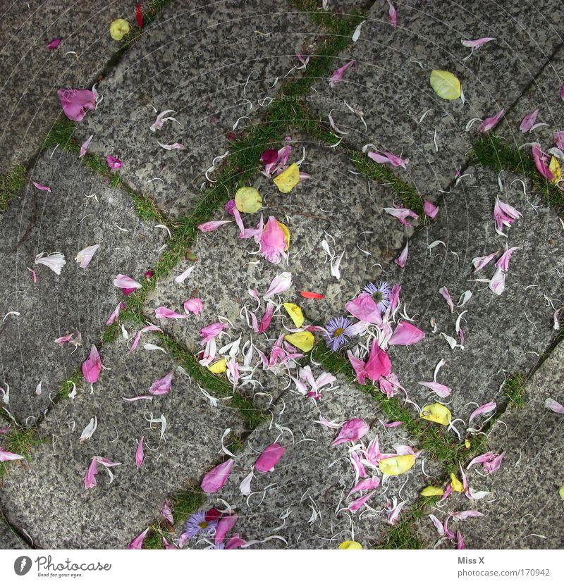 Hochzeit Blume Wege & Pfade Blüte Kopfsteinpflaster Blütenblatt Pflastersteine verteilen