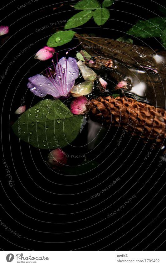 Still und nass Umwelt Pflanze Blatt Blüte dunkel Zusammensein natürlich Traurigkeit Sorge Trauer Tod Hoffnung Idylle Schweben trösten fließen ruhig Farbfoto
