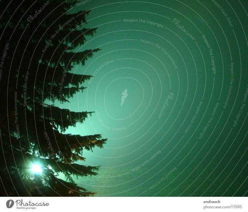 Nachtschattenspender Baum grün Beleuchtung Nebel gruselig Tanne erleuchten mystisch Fototechnik