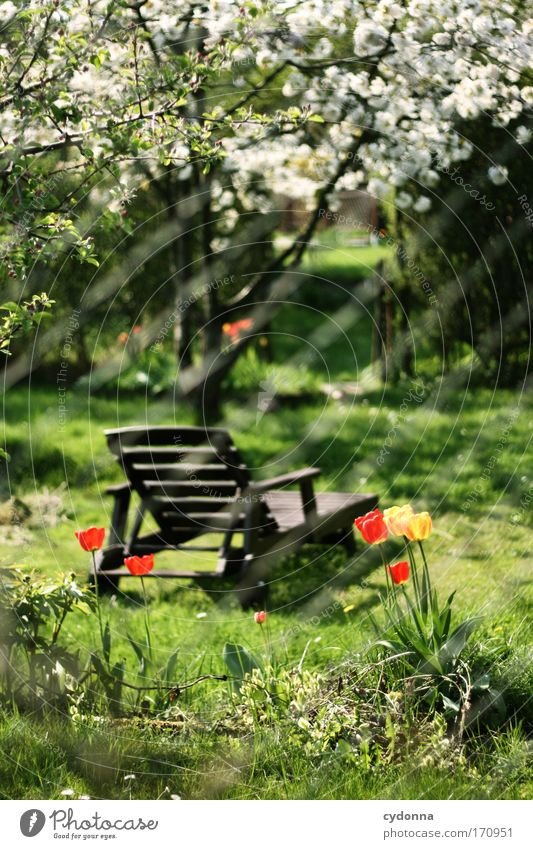 Relaxstuhl Natur Baum Blume Pflanze Sommer ruhig Leben Erholung Gefühle Gras Frühling Garten Freiheit träumen Traurigkeit Zufriedenheit