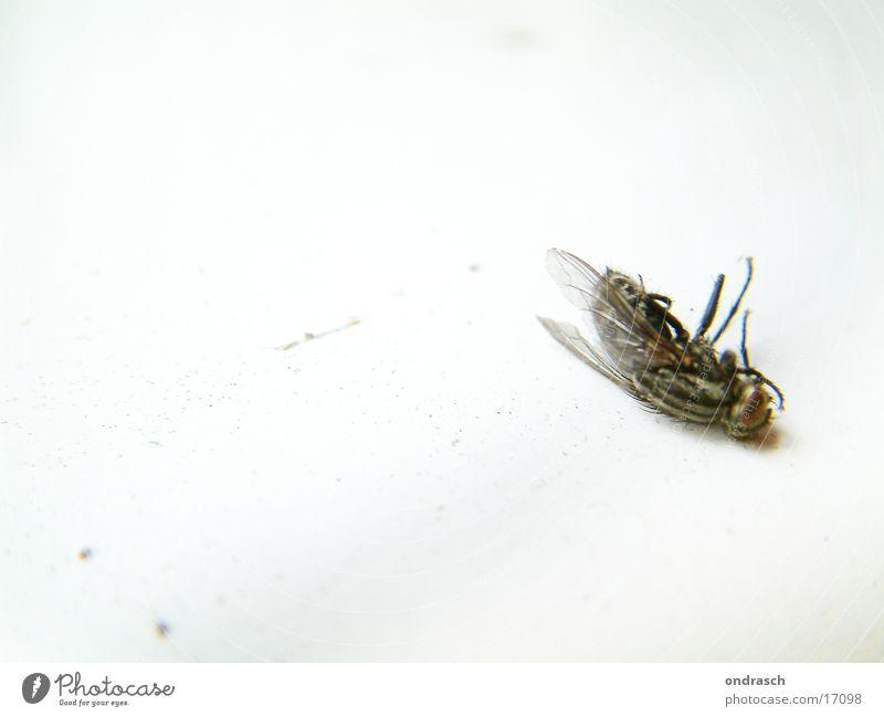 Puck ist tot ruhig Ernährung Tod Wohnung Fliege Lebensmittel Insekt unruhig Bremse gestört