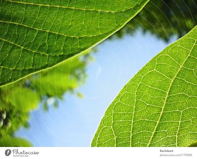 severed. garden. Natur Himmel Baum Pflanze Sommer Blatt Leben Erholung Frühling Glück Zufriedenheit Kraft Design Umwelt Hoffnung ästhetisch