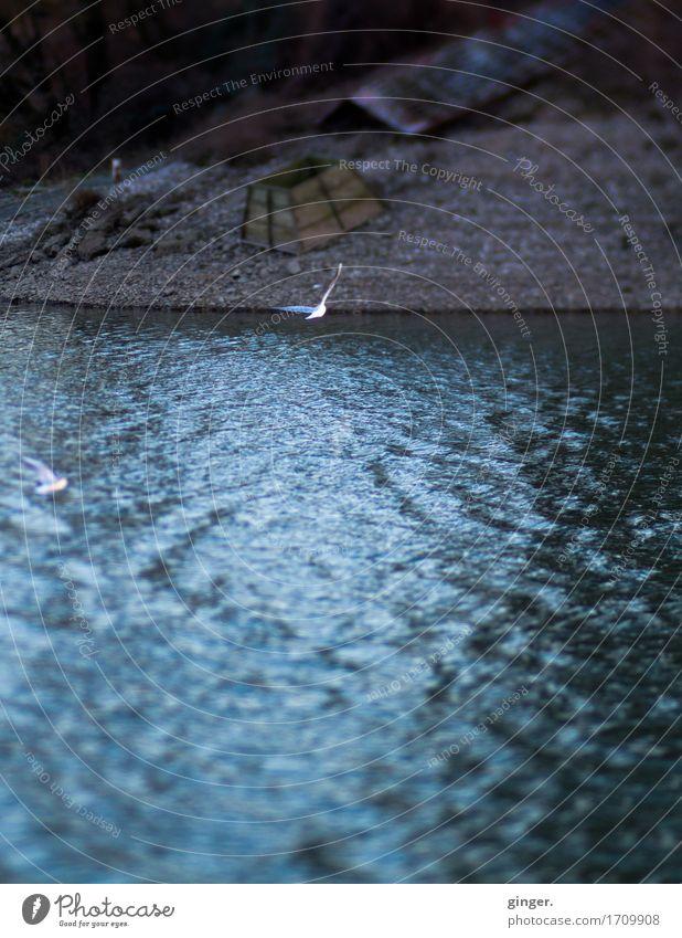 Tlön | Die andere Seite Natur blau Wasser Strand Umwelt Herbst fliegen Vogel braun 2 Wetter Erde Wellen geheimnisvoll Flussufer Möwe