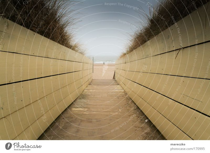 Am Meer Wasser Ferien & Urlaub & Reisen Meer Strand ruhig Ferne Erholung Freiheit Holz Wege & Pfade Sand träumen Horizont Wind gehen Ausflug