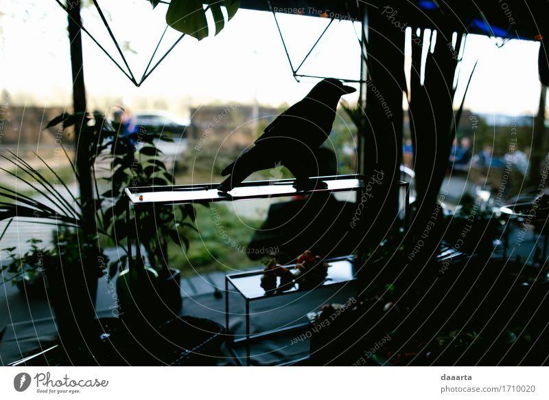 Vogelschatten Pflanze Sommer Blatt Freude Leben Innenarchitektur Lifestyle Stil Spielen Freiheit Feste & Feiern Party Stimmung Design wild