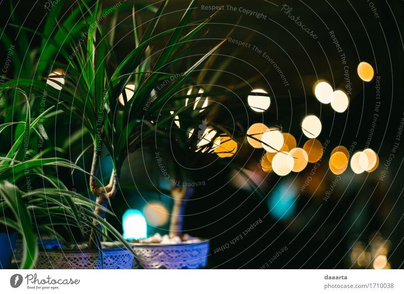 Stimmungsmacher Pflanze Freude Leben Innenarchitektur Gefühle Lifestyle Stil Feste & Feiern Freiheit Party Lampe Design Häusliches Leben Freizeit & Hobby