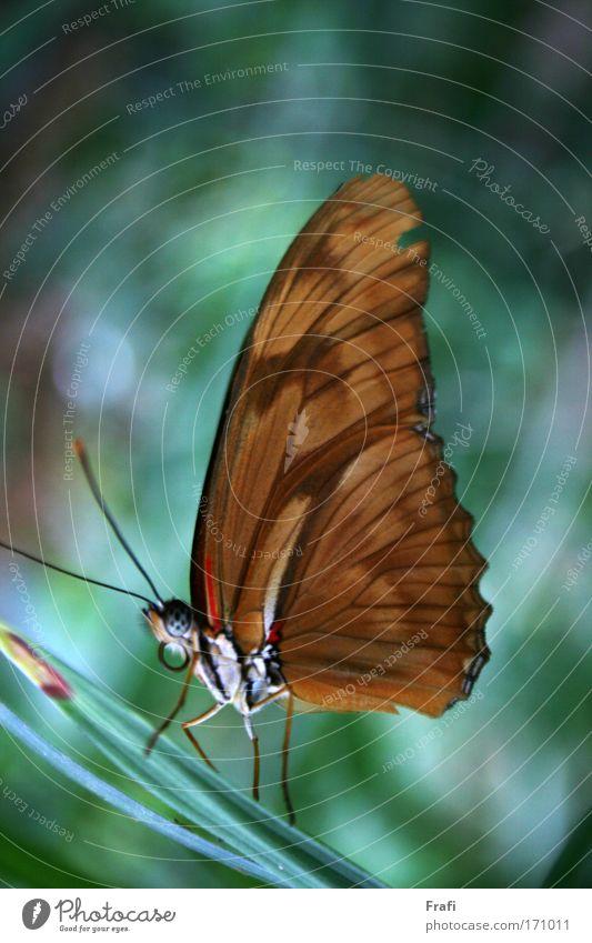 Schmetterling Natur schön grün Pflanze Sommer ruhig Blatt Tier Park braun fliegen fantastisch Idylle berühren