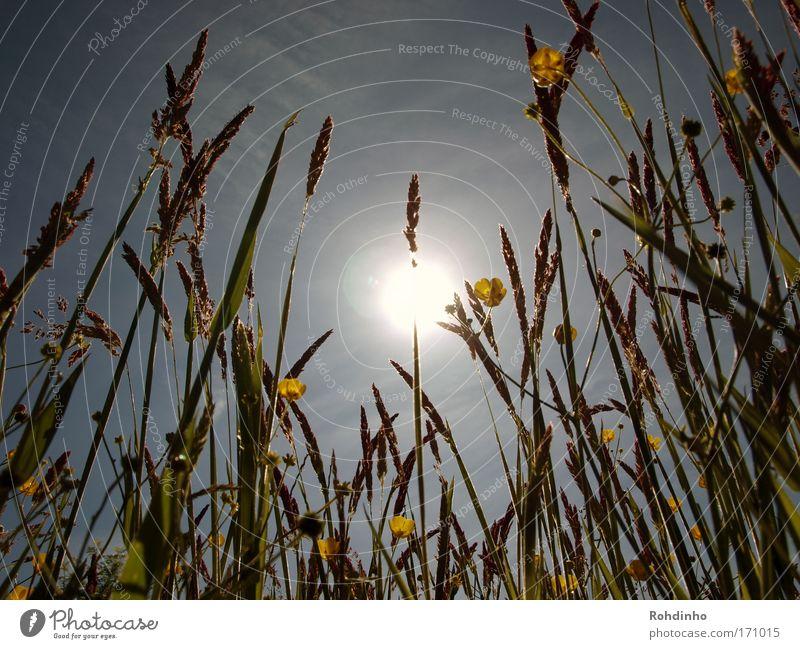 der Sonne entgegen Natur Pflanze Sonne Sommer Ferien & Urlaub & Reisen Blume Ferne Freiheit Landschaft Umwelt Gras Blüte Frühling Wärme Wetter Ausflug