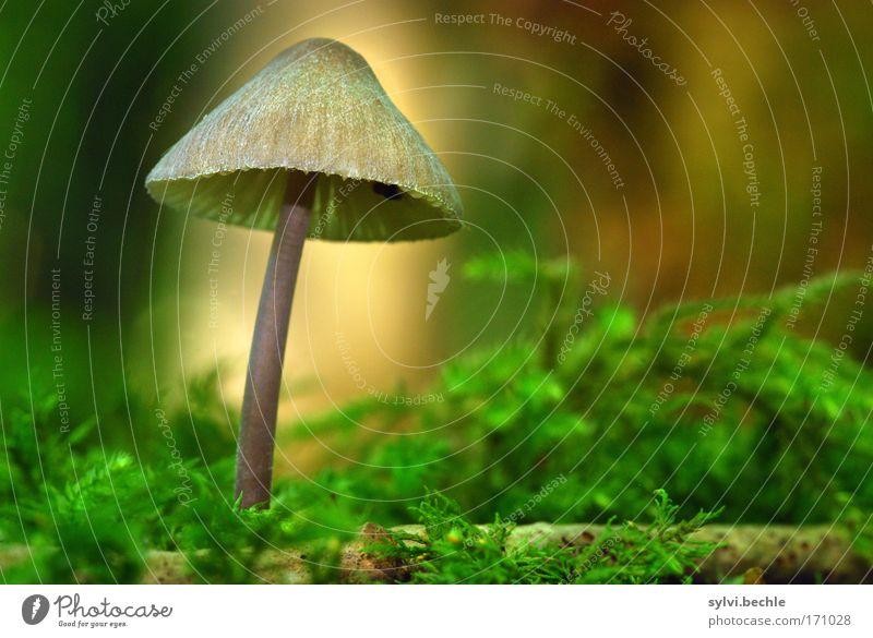 noch´n pils(z)? - IV Natur grün Pflanze Sommer Ernährung Lebensmittel Holz klein braun natürlich Wachstum Ast Gemüse Regenschirm dünn Hut