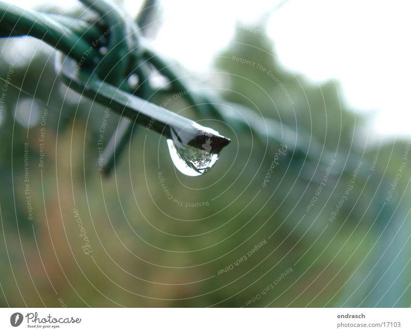 regentag Zaun Stacheldraht Grenze grün gefangen Trauer Gegenteil Draht Eisen Wassertropfen Regen Spitze Barriere