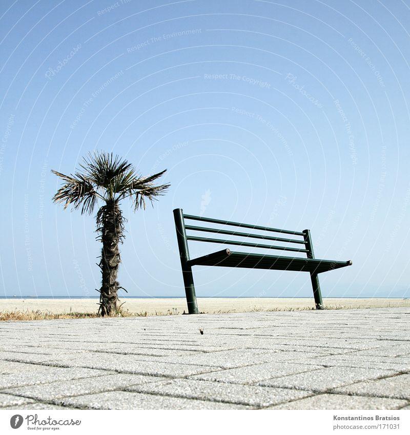 ein Platz an der Sonne Himmel Ferien & Urlaub & Reisen schön Pflanze Sommer Meer Erholung Strand Wärme sprechen Wege & Pfade Freiheit natürlich hell Horizont