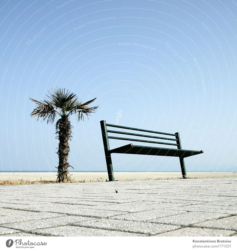 ein Platz an der Sonne Himmel Ferien & Urlaub & Reisen schön Pflanze Sommer Sonne Meer Erholung Strand Wärme sprechen Wege & Pfade Freiheit natürlich hell Horizont