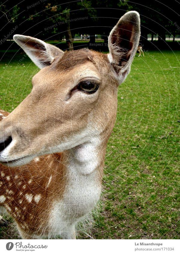 Disney's Bambi II Natur grün Baum Tier Umwelt Wiese Gras Frühling Denken Park braun Deutschland Energiewirtschaft natürlich Wildtier Ausflug