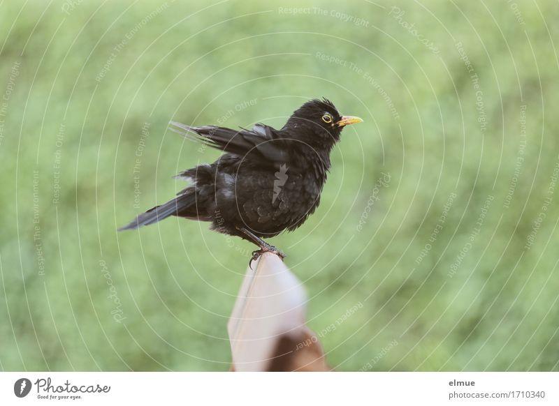 geschüttelt, nicht gerührt! Sträucher Garten Gartenbank Vogel Amsel Feder Schnabel Blick sitzen schön klein lustig Neugier grün schwarz Freude Lebensfreude