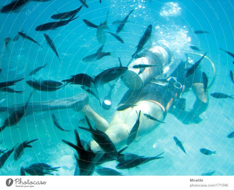 Fischi-Fischi-Fischi Farbfoto Außenaufnahme Unterwasseraufnahme Zentralperspektive Tierporträt Ganzkörperaufnahme Rückansicht Freude Freizeit & Hobby