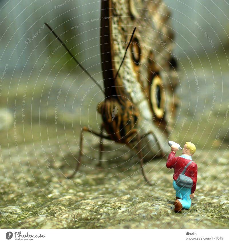Mini(Kre)atur Mensch Natur Tier klein Freizeit & Hobby Felsen maskulin groß Abenteuer Wildtier außergewöhnlich Flügel bedrohlich Filmindustrie nah gruselig