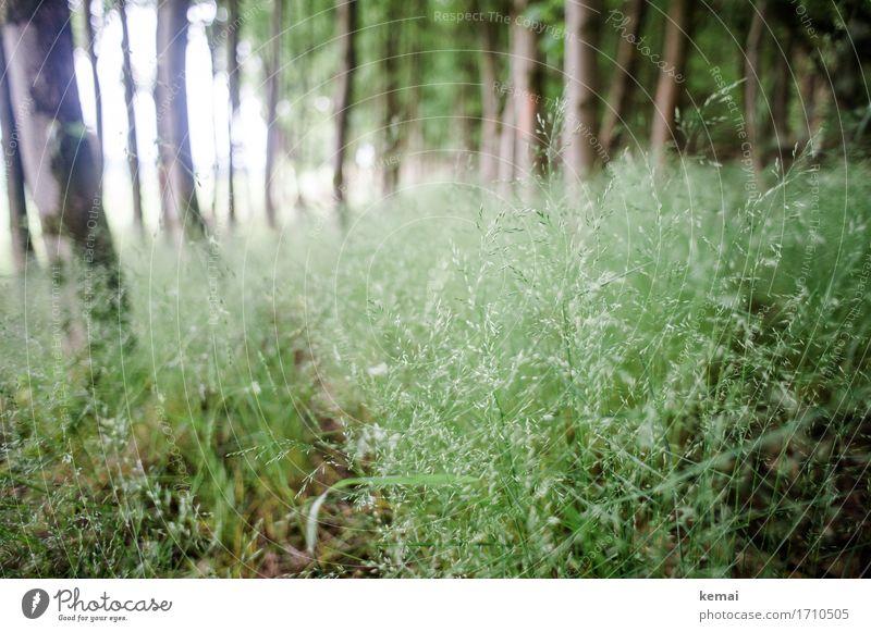 AST9   Wo die Zecken stecken Freiheit Natur Pflanze Sommer Baum Gras Grünpflanze Wald frisch grün Unterholz Gräserblüte viele Farbfoto Gedeckte Farben