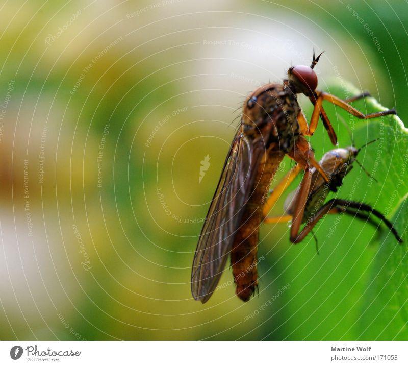 der Tod, dein ständiger Begleiter Natur grün Tier Blatt Vergänglichkeit Macht Insekt gruselig fangen Jagd Fressen Käfer
