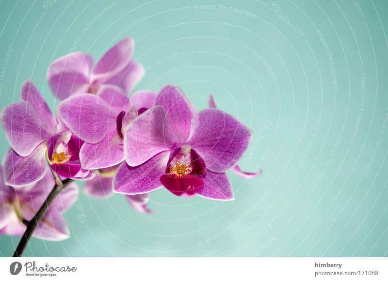 ooops i did it again Natur Pflanze schön Erholung Blume ruhig Blüte natürlich Dekoration & Verzierung ästhetisch Wellness Wohlgefühl Duft harmonisch positiv