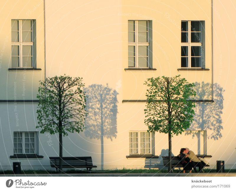 licht und schatten Mensch Frau Mann Baum Erwachsene Liebe Erholung Gefühle Glück Paar Zusammensein Fassade Senior maskulin paarweise Romantik