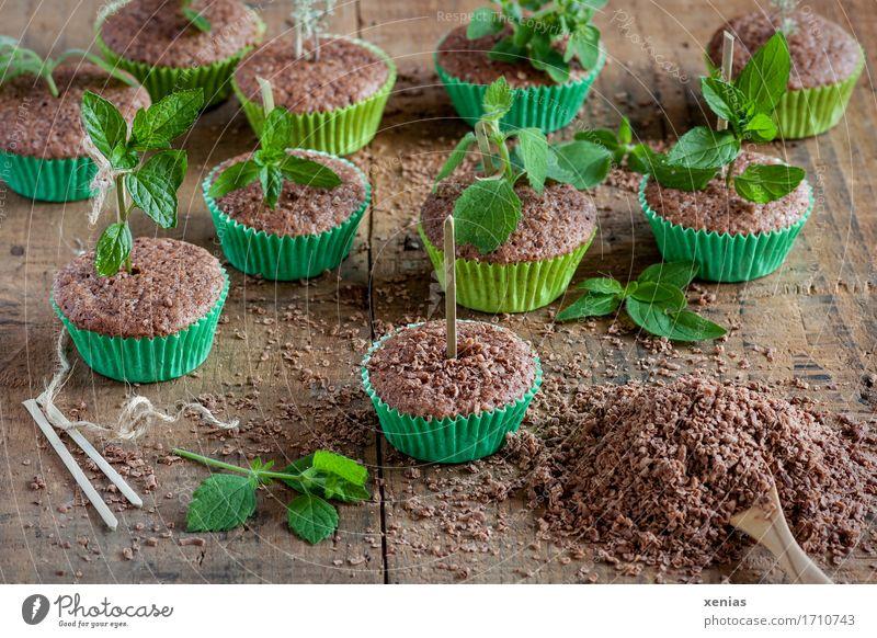Schokoladenkuchen in grünen Muffinförmchen mit Zitronenmelisse wie in der Gärtnerei angeordnet Teigwaren Backwaren Kuchen Süßwaren Kräuter & Gewürze Zucker