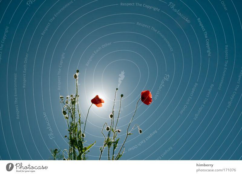 mohntag ist sonntag Himmel Natur Pflanze Sommer Erholung Blume ruhig Umwelt Leben Frühling Blüte Wetter Feld Zufriedenheit ästhetisch Klima