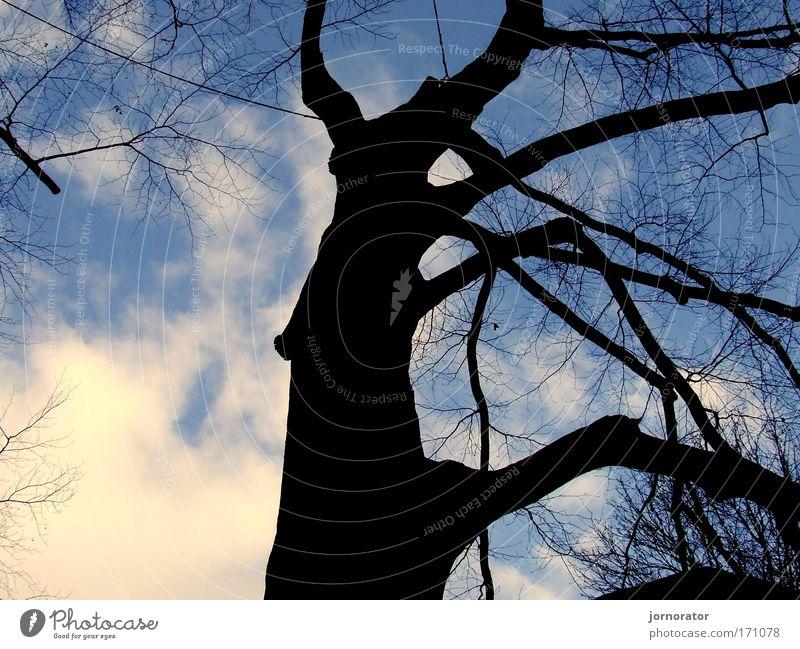 Schatten-Baum-Umrisse Natur Winter Hoffnung standhaft Schattenseite